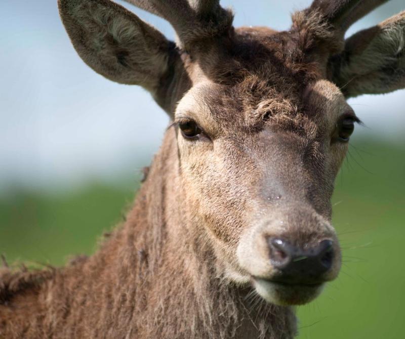 Scottish Wildlife are always in abundance when you travel on a Lochs & Glens coach tour.