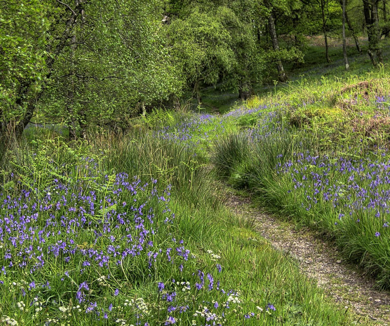 There's loads of footpaths to explore when you stay at one of Lochs & Glens many Scottish highland hotels.